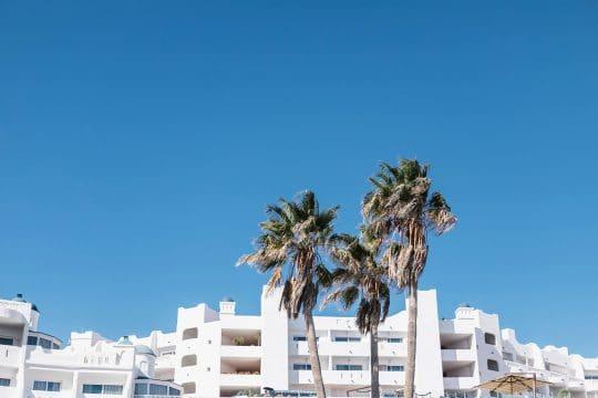 Canaries Tenerife palm