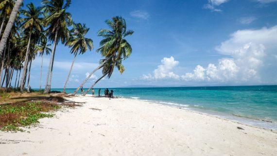 Caribbean Palm tree beach