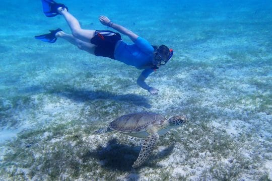 Caribbean swimming with turtle