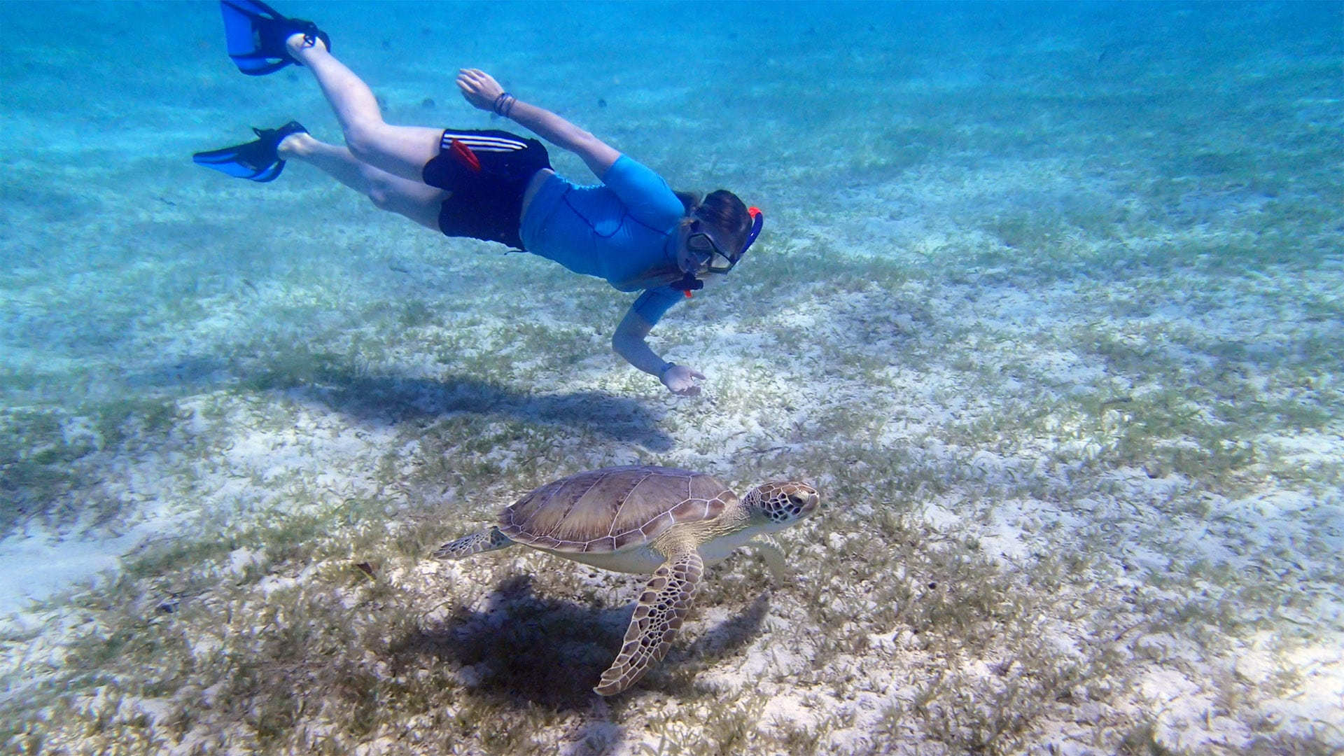 Carribean-turtle-diver