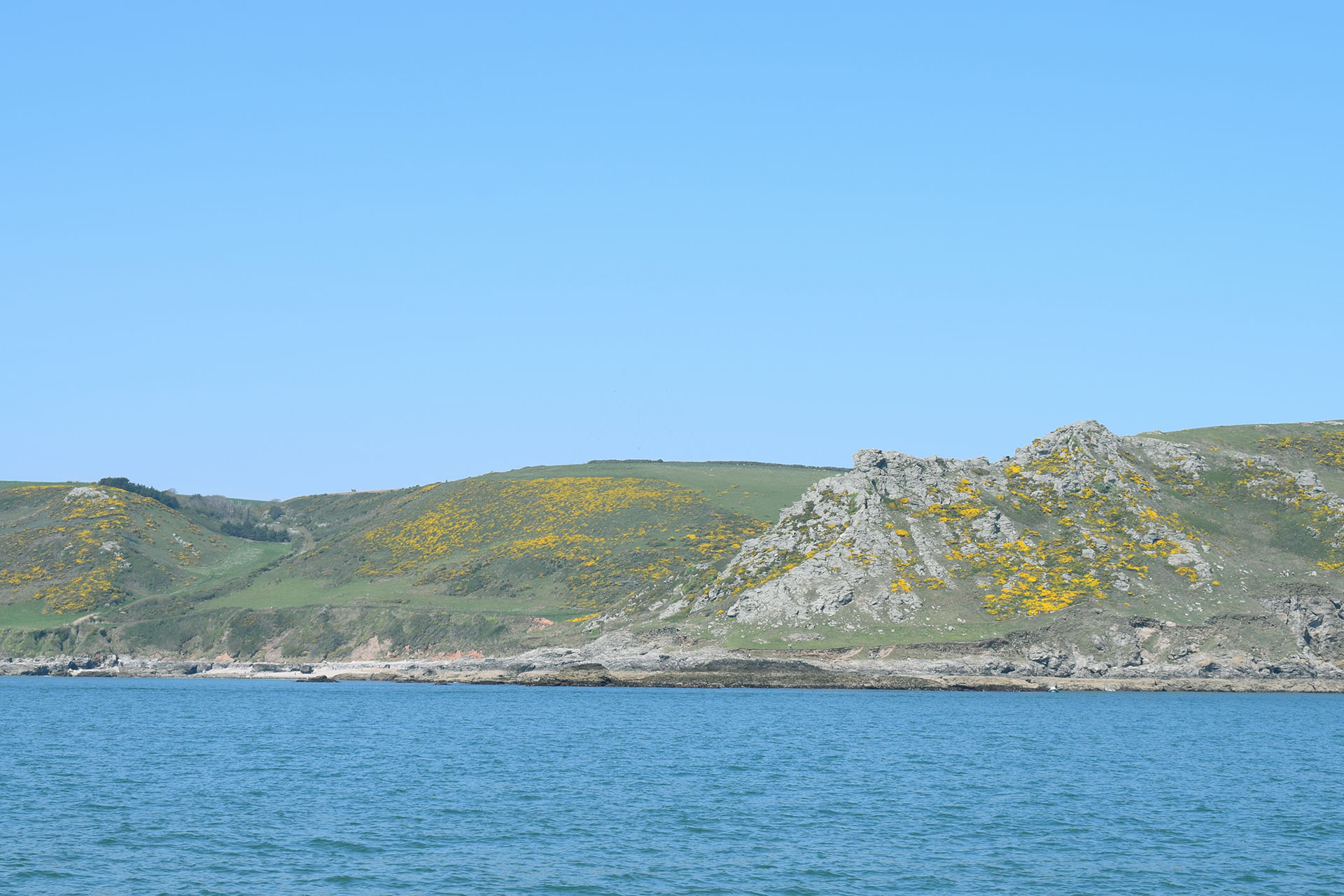 Devon Coast gorse