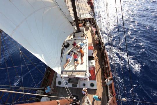 Florette Sailing birds eye