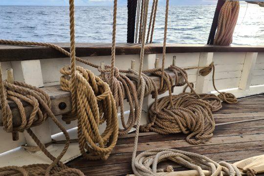Grayhound ropes on deck