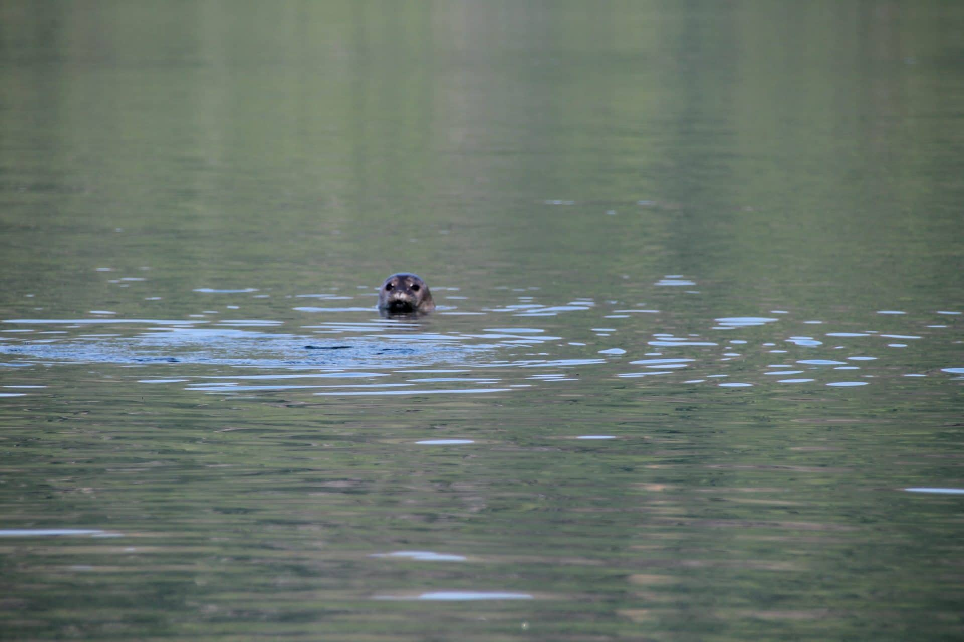 Zuza scotland seals