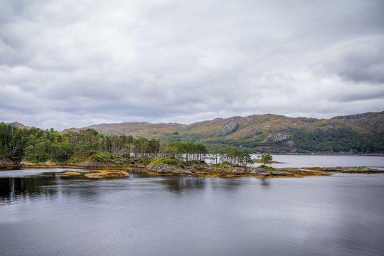 Narwhal Skye Scotland