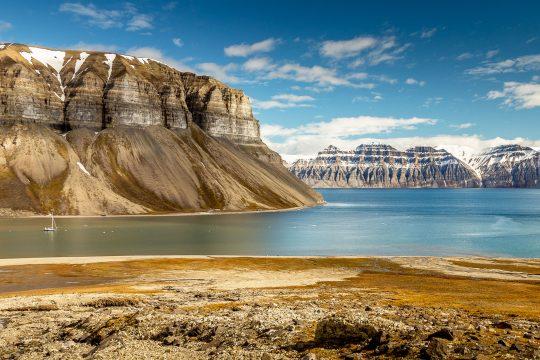 Narwhal Svalbard