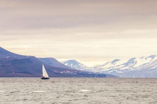 Narwhal sailing Svalbard