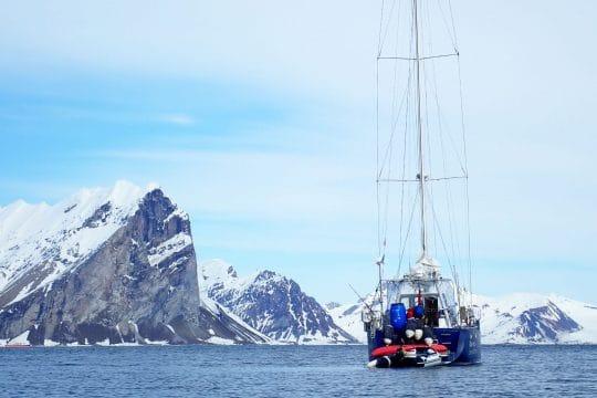 Narwhal stern Svalbard