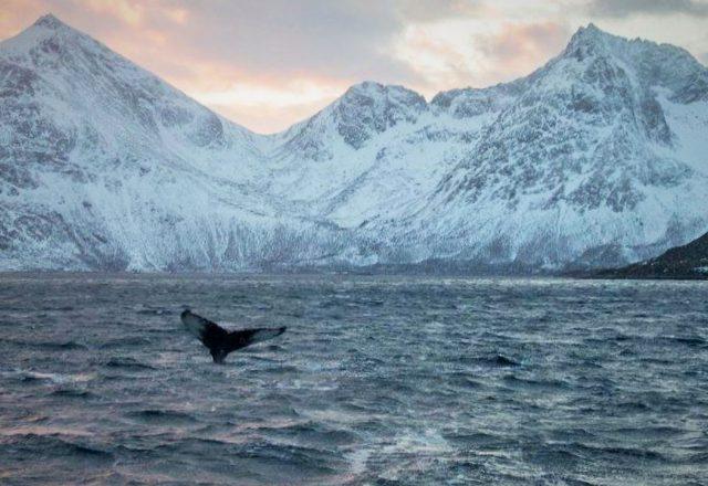 Sailing in Svalbard; Whalers Footsteps