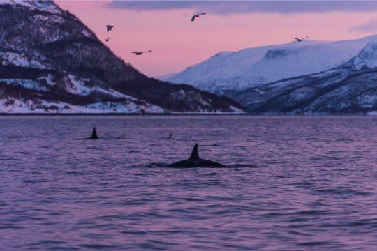 Noorderlicht Whale Watching