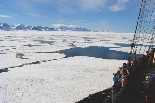 Noorderlicht-sailing-svalbard-artic-polar-bear
