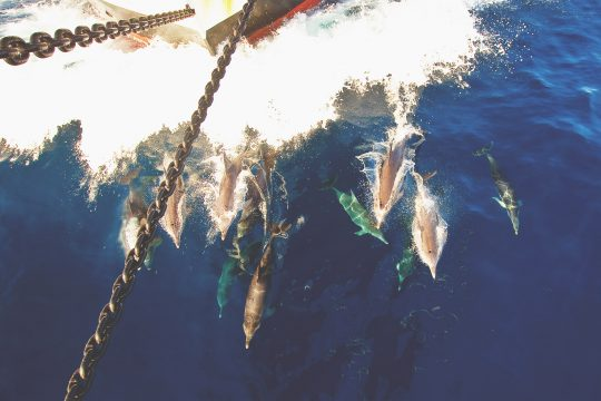 Oosterschelde dolphins in the bows