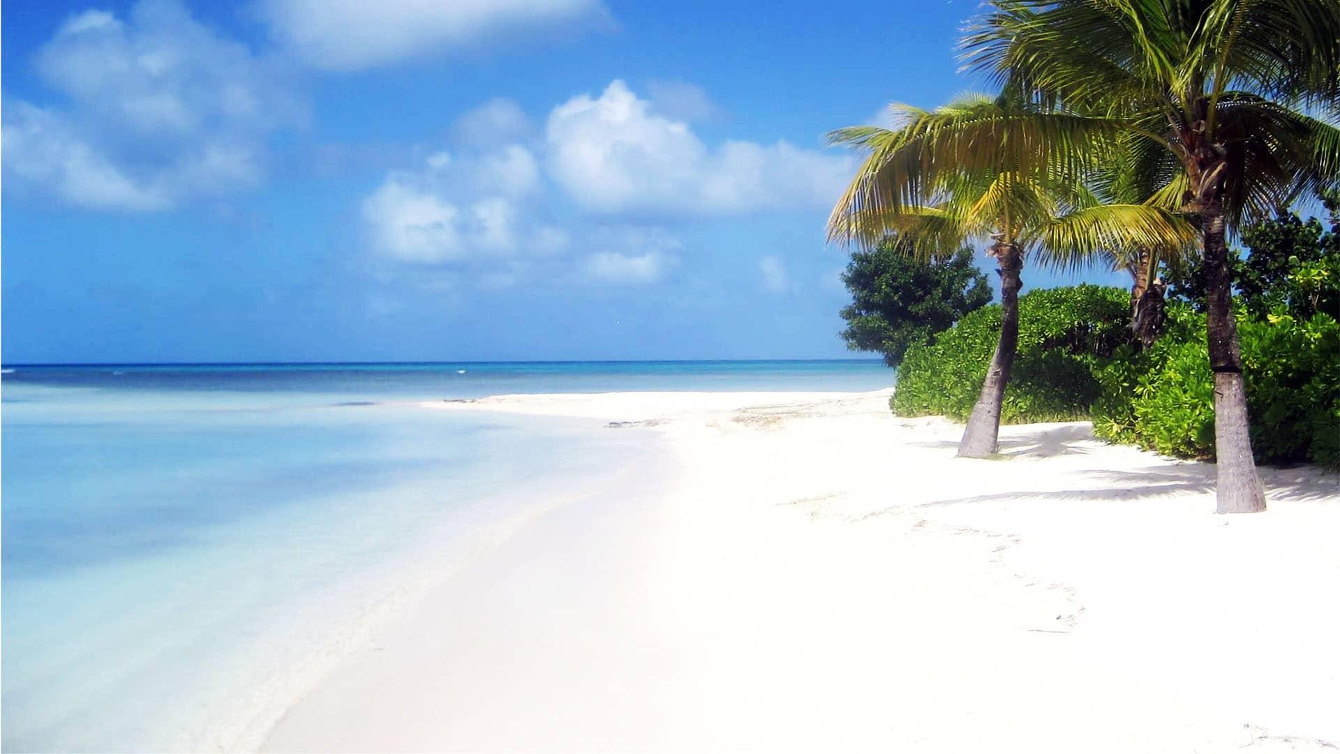 SC caribbean palm beach