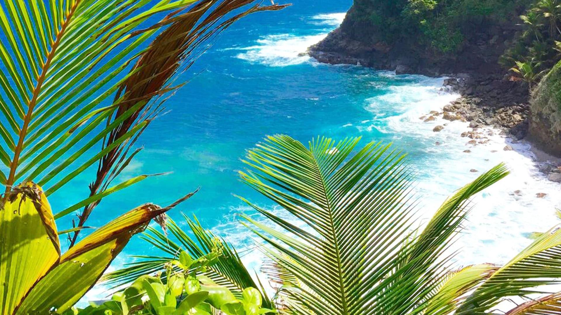 caribbean palm coast