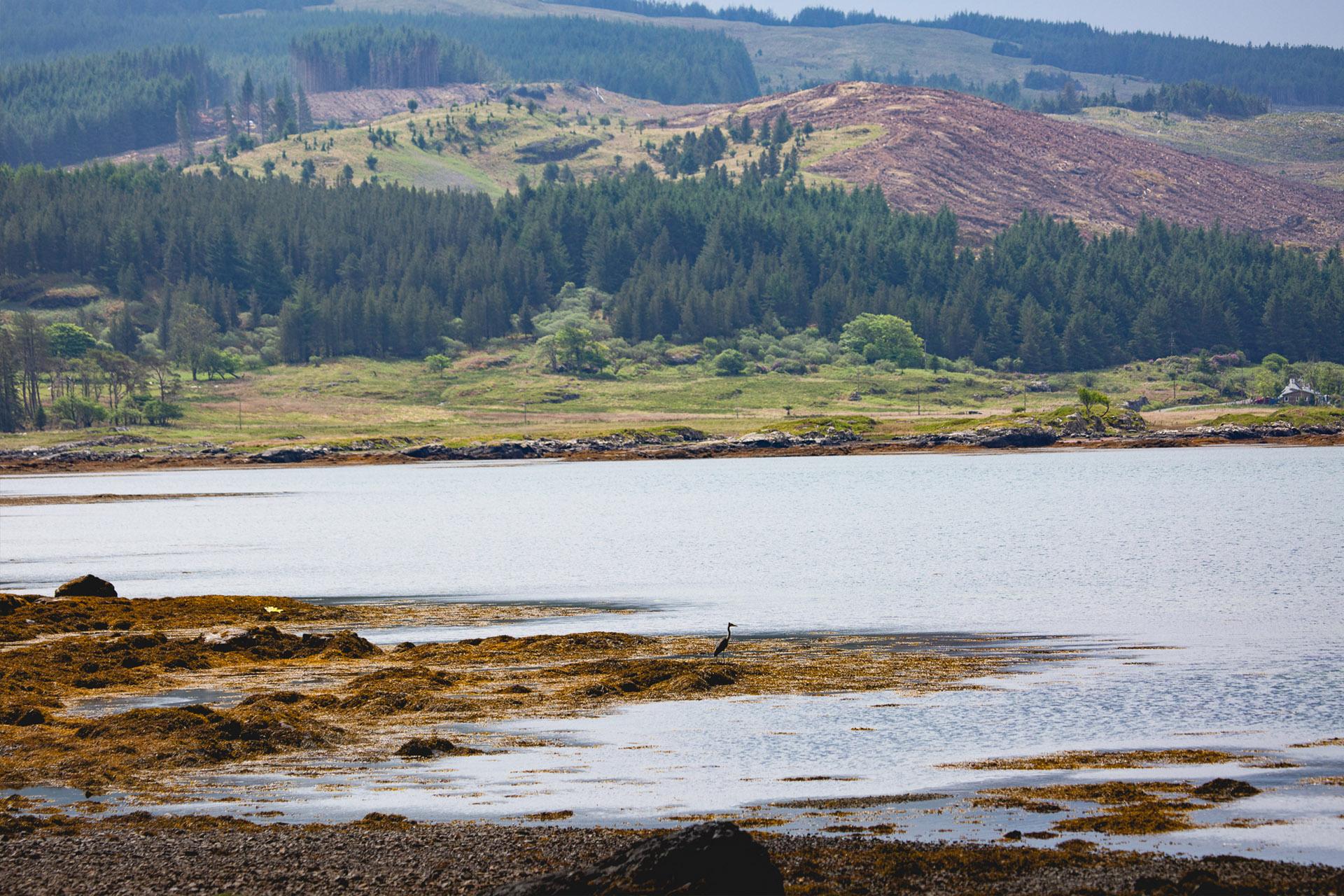 Scotland-Mull-Loch-Heron
