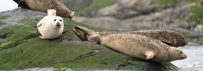 Seals in the hebrides